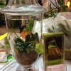 Glass Terrarium – New Trends 2012